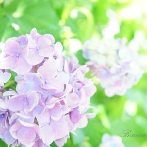 空いてて快適♪湘南の紫陽花おすすめスポット!~引地川親水公園~