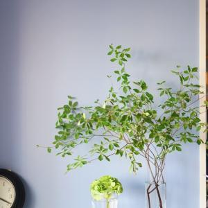 アトリエのリノベ進行中♪ブルーグレーの壁&アンティーク調ガラスの白い建具