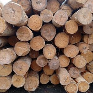 木材利用について考える