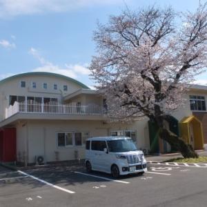 一時保護施設「のぞみ」 桜満開です