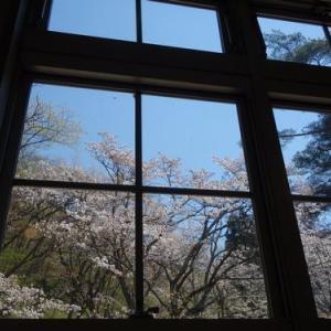北上市博物館とみちのく民俗村の桜