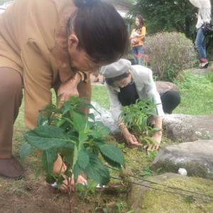 耶馬溪アジサイ植樹ボランティア 植樹の様子