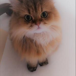 ★保護猫ちゃんラブ繋がる命