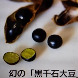 ★新月の味噌作り!と報道されないニュース