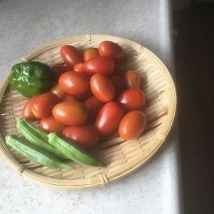 我が家の野菜