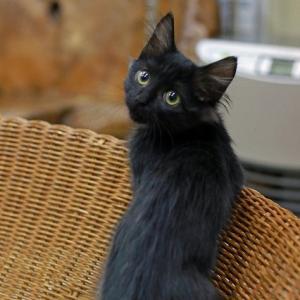 黒猫福猫!出発!
