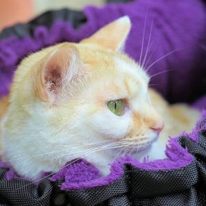 明日の猫カフェはお休みです。