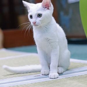 ももこ日記 猫パンチ