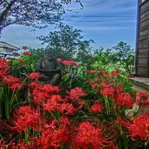 常楽寺の彼岸花
