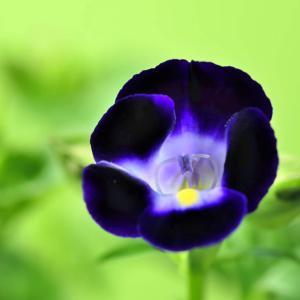 花の中のリング