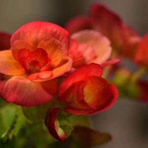花撮り…マクロ撮影…思うこと