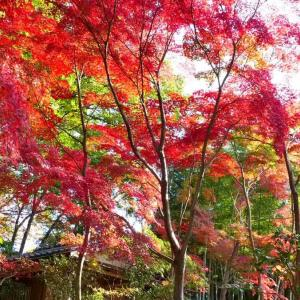 自分流紅葉の撮り方