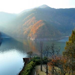 桐生川の紅葉