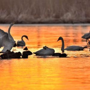 オレンジ沼での羽ばたき