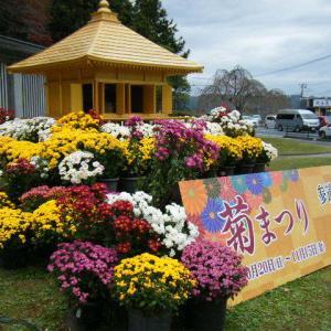 秋の中尊寺、菊祭り、紅葉2019-11-09-01