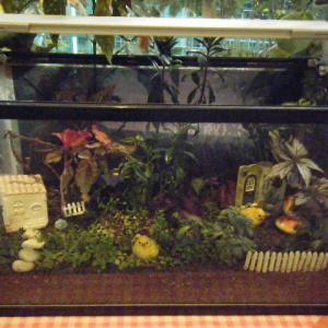 花と泉の公園。ベゴニア館のシクラメン2019-11-16-05