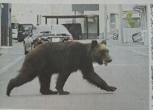 熊出没・・・超驚き