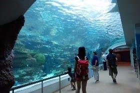名古屋港水族館 その5