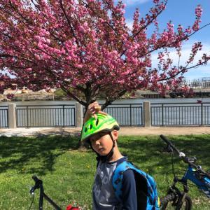 ルーズベルト島で花見&サイクリング