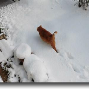 大雪の中で
