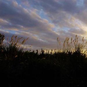 秋は夕暮れ5 カラスウリ