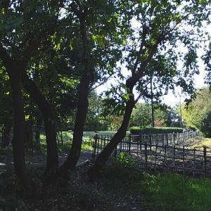 秋 木漏れ日の森を歩く2