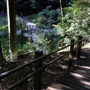 秋 木漏れ日の森を歩く3