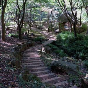 東丹沢 七沢森林公園散策2