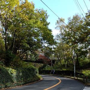 横浜 谷戸の原風景1