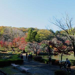 晩秋 薬師池公園2