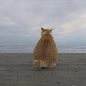 猫の後ろ姿 2071 鎌倉のネコ キイロ