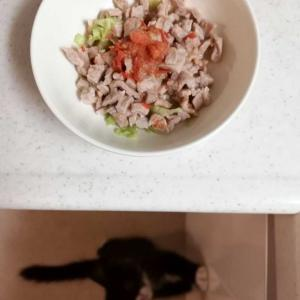 豚肉レタスプチトマト(猫ごはん)