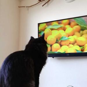 しいたけのテレビ