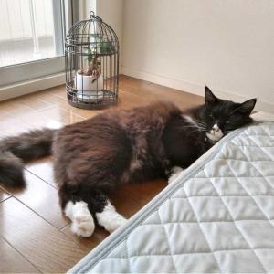 高すぎるけど平気な枕