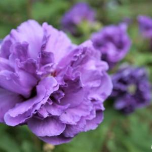 ♪Mysterious Flower♪