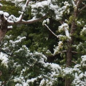 4月の雪景色&W3C