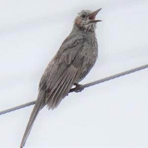 必死に鳴く鳥と♪7月の雨なら♪