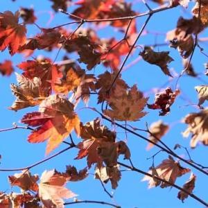 庭の秋と♪ 枯葉 ♪
