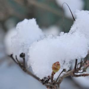 今朝の雪と♪冬の散歩道♪