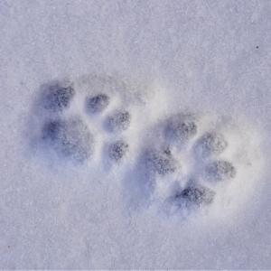 雪に残る足跡🐾と♪Count on Me♪