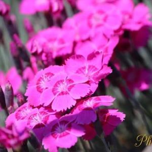 花も曲も♪イロトリドリ♪