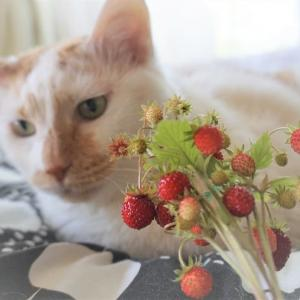 小桃と苺と🍓レボリューション♪