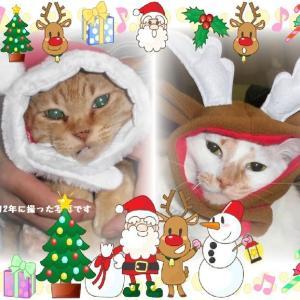 にゃ~にゃ~の日&クリスマスイブ