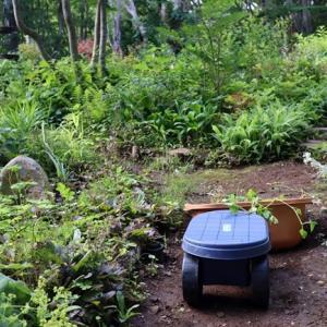草引きと庭の様子