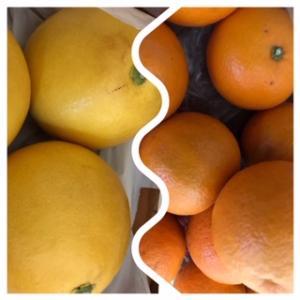 細る果物消費量の中、輸入のキウイ、ブドウ、りんごは増えているんだって