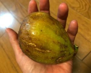 おいしい旬の夏の果物♪ジューシーだから、果実でのかぶれには用心です