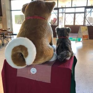 秋田犬会館と資料館。。。。