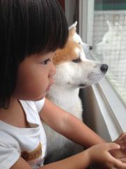 老犬でも秋田犬!。。