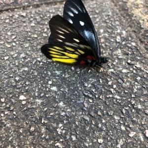 蝶だわん!