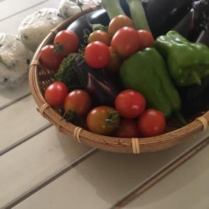 朝採れ野菜を楽しむ